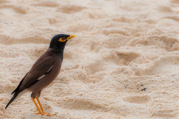 砂浜の孤独なホオジロ鳥 無料写真