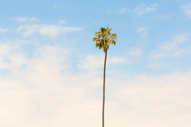 Lonely palm tree on blue sky background Premium Photo