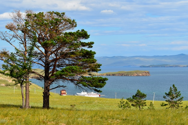 孤独な木と山の風景 Premium写真