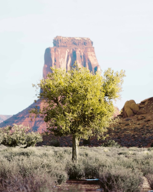 Lonely tree in the desert of grand canyon with a high rock Free Photo