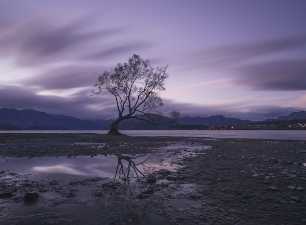 Lonely tree at the lake at sunset Premium Photo
