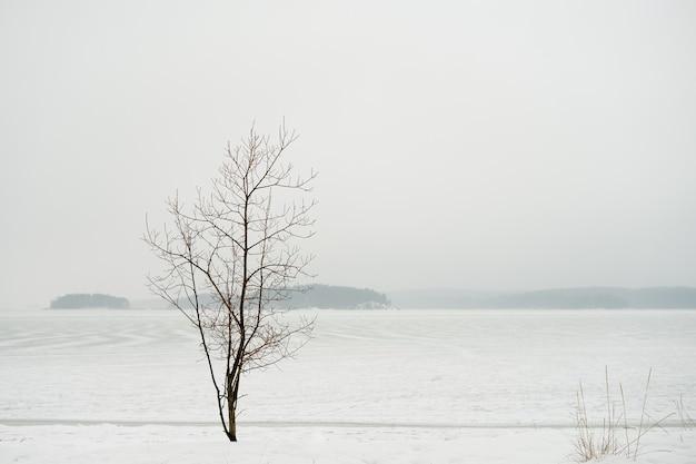 冬の海岸と凍った島々の孤独な木 Premium写真