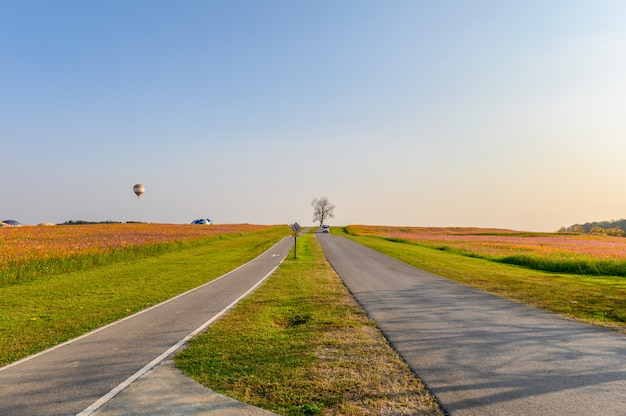 Lonely tree with cosmos garden and road on hill Premium Photo