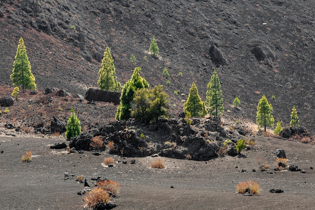 Lonely trees growing on volcanic ground Free Photo