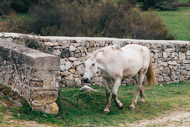 石垣の近くを歩く孤独な白い馬 無料写真