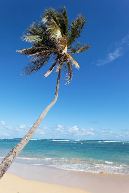 Длинная пальма на карибском пляже летом Бесплатные Фотографии
