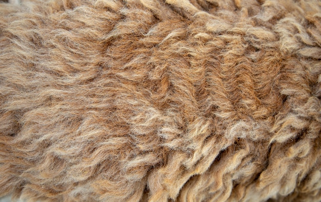 Long sheep wool texture for garment textile Premium Photo