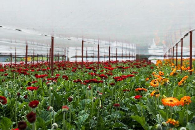 Long shot flowers inside greenhouse Free Photo