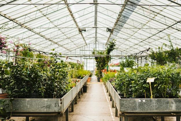 温室内でのロングショット 無料写真