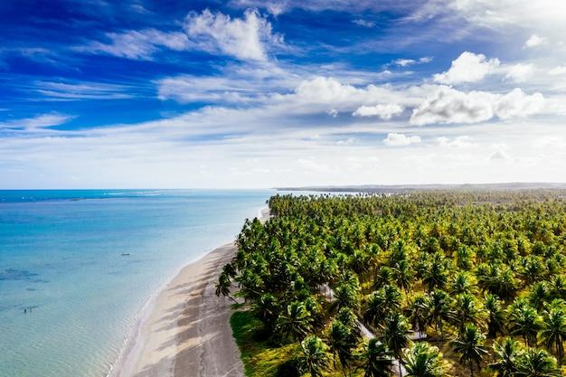 晴れた日にココナッツの木が並ぶ白い砂浜の美しい海岸線のロングショット 無料写真