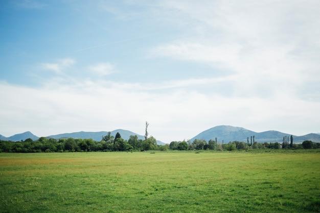 緑の牧草地のロングショット Premium写真