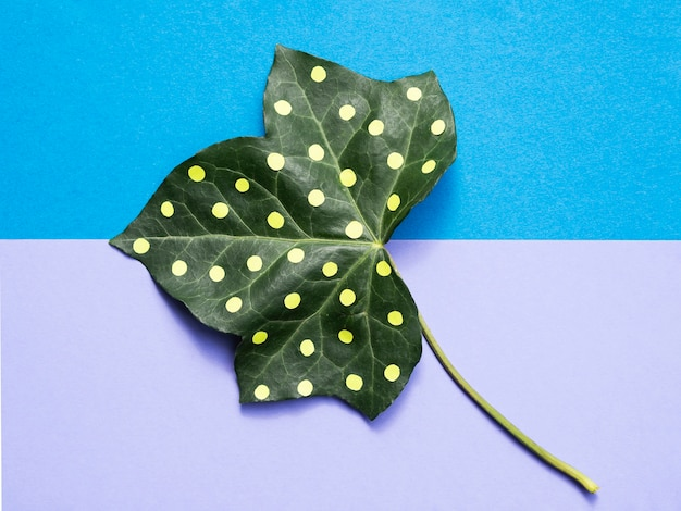 Long view painted leaf on pink background flat lay Free Photo