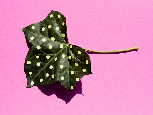 Long view painted leaf on pink background top view Free Photo