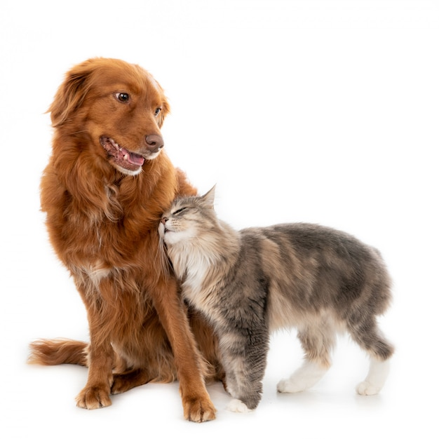 Longhaired cat cuddling with a dog Premium Photo
