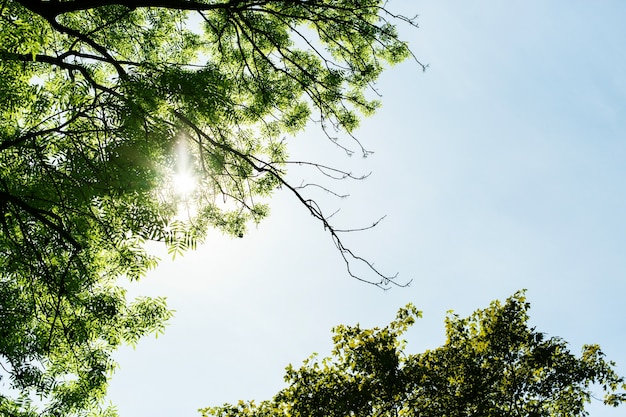 Look from below at sun shining through the tree branches Free Photo