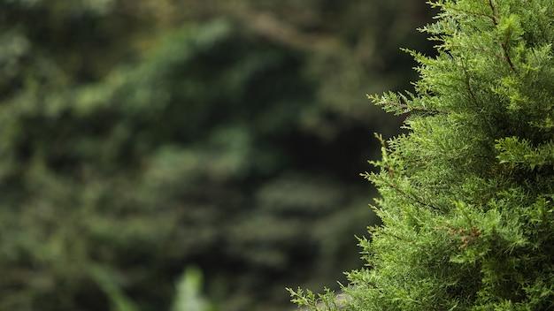 С 구과 맺는 나뭇 가지의 손실 업. 발리. 인도네시아. 무료 사진