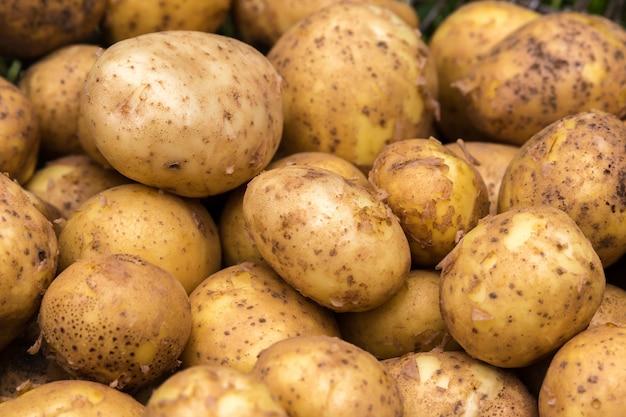 Lot of fresh potatoes close up Premium Photo