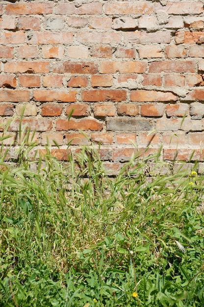 Lot of green grass growing in front of an old brick wall Free Photo