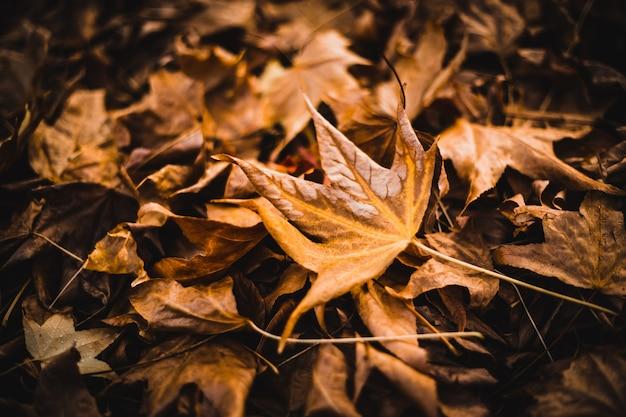 地面にたくさんのカエデの葉 無料写真