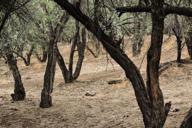 日中の森の緑の葉を持つ多くの古い木 無料写真