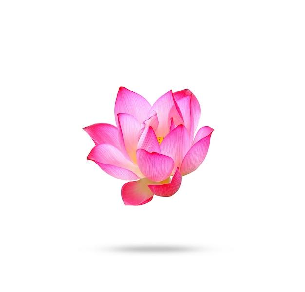 蓮の花は白い背景で隔離。 Premium写真