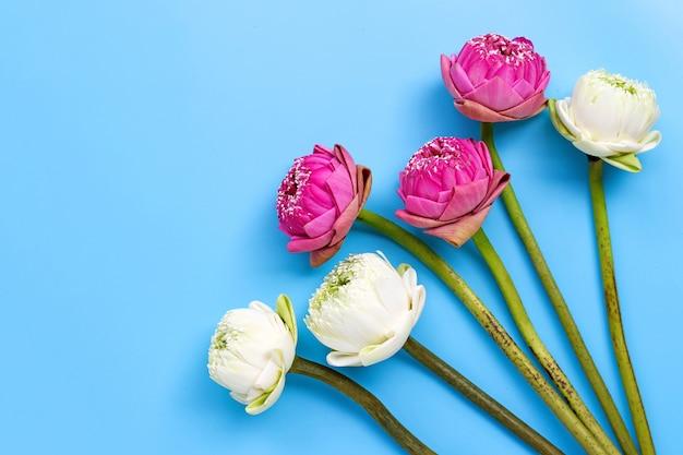 青に蓮の花。上面図 Premium写真