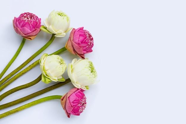 ハスの花。上面図 Premium写真