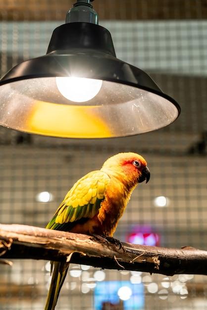 ケースの愛の鳥 Premium写真