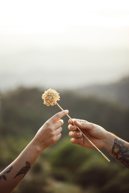 Жест любви одуванчика предлагается Бесплатные Фотографии
