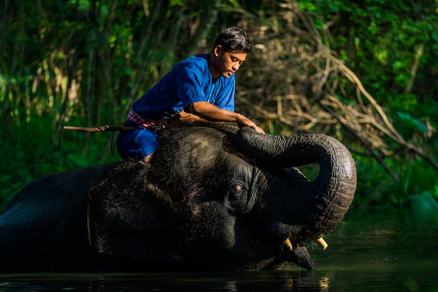 Love of mahout with his elephant, thailand Premium Photo