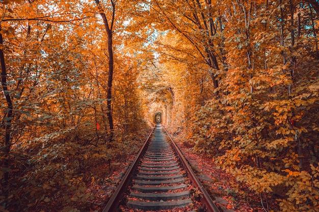 Love tunnel in autumn Premium Photo