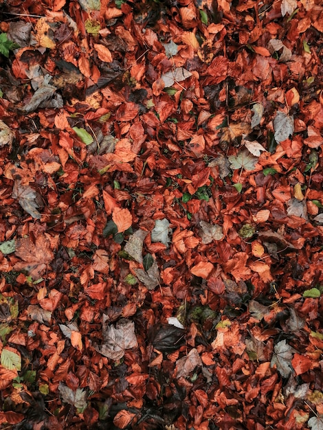 Lovely autumn leaves background Free Photo
