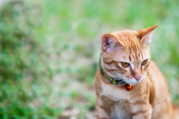 Lovely brown domestic cat in green garden Free Photo