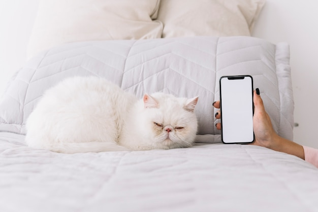 Lovely cat composition with technological device Free Photo