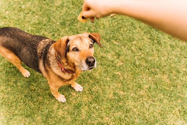 Lovely dog posing in the garden Free Photo