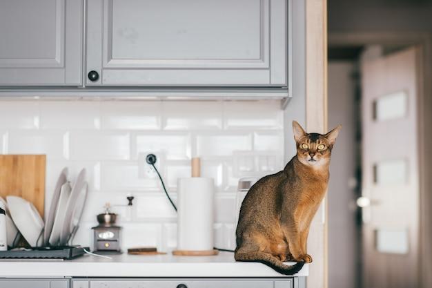 Lovely funny kitten at kitchen. Premium Photo