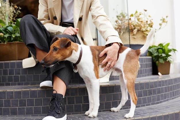 Il bel cane di razza jack russell terrier si trova vicino al suo proprietario, distoglie lo sguardo con attenzione Foto Gratuite