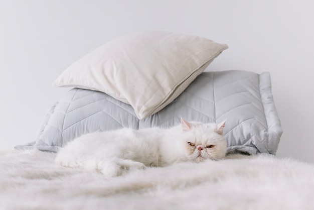 Lovely pets composition with sleepy white cat Free Photo