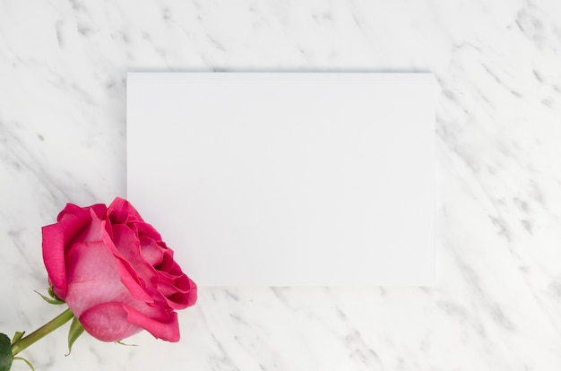 Lovely pink rose and empty card Free Photo