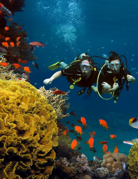 The loving couple dives among corals and fishes in the ocean Premium Photo