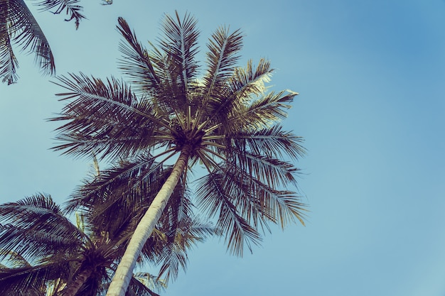 Low angle beautiful coconut palm tree with blue sky background Free Photo