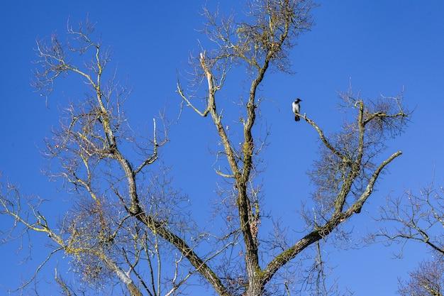 Низкий угол вороны, отдыхающей на ветке дерева в парке максимир в загребе, хорватия Бесплатные Фотографии