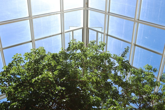 Low angle shot of the beautiful trees inside a greenhouse under the sun light Free Photo