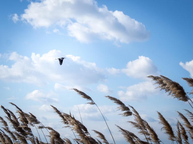Low angle shot of a bird flying under a cloudy sky during daytime Free Photo