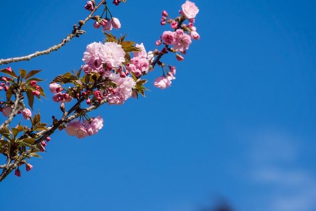 Inquadratura dal basso di un fiore che sboccia sotto un cielo blu Foto Gratuite