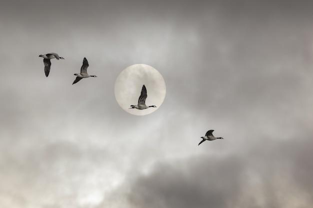 Inquadratura dal basso di anatre che volano sotto un cielo nuvoloso e una luna piena - perfetta per gli sfondi Foto Gratuite