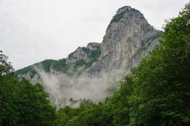 Inquadratura dal basso di una montagna di roccia nebbiosa contro un cielo nuvoloso con alberi in primo piano inferiore Foto Gratuite