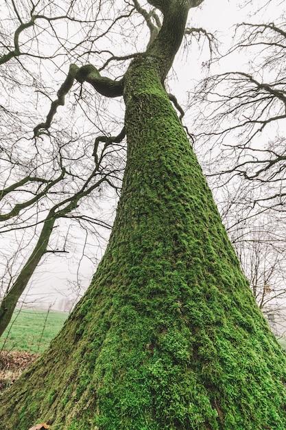 Inquadratura dal basso di un enorme albero nella foresta con un cielo cupo Foto Gratuite