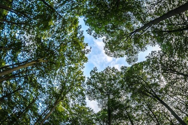 Низкий угол обзора синего облачного неба и леса, полного деревьев Бесплатные Фотографии