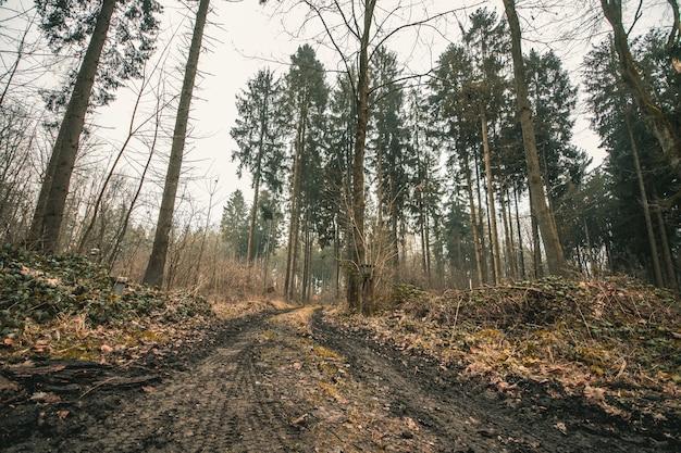 巨大な木々と暗い空と林道のローアングルショット 無料写真